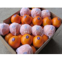 Exportieren von China Orange (SML)