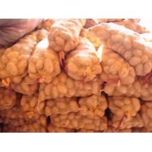 Chinesische goldene gelbe frische Kartoffel