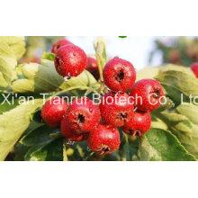 Hawthorn Fruit Powder/Hawthorn Juice Powder/Hawthorn Extract Powder