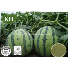 High Quality & Natural Watermelon Peel Extract, Watermelon Rind Extract Powder