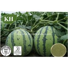 De alta qualidade e natural de casca de melancia, extrato de melancia extrato em pó