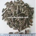 Горячие продажи 5009 семян подсолнечника большого размера