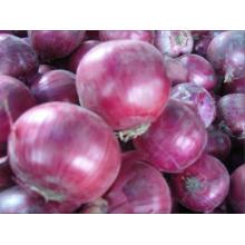 Exportation d'oignons en gros prix de l'oignon rouge