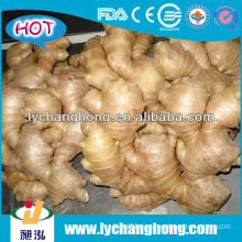 fresh ginger exporters/organic ginger fresh with export carton high quality