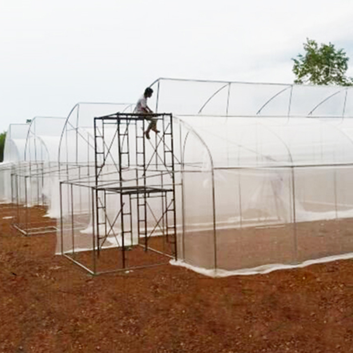 Agriculture Insect Proof Mesh Screen