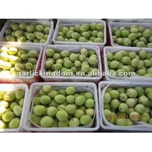 Nuevo Cultivo Shandong Pear de Origen