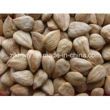 Amêndoa doce (longwangmao 700 PCS / 500g)