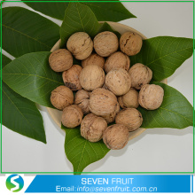 Best Quality Inshell and shelled Chandler Walnuts