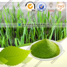 Weizen-Gras-Pulver