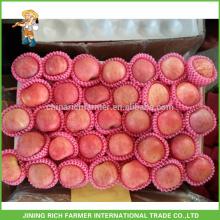 Formes conventionnelles Rouge et Forme Type de pomme de terre chinoise A Fresh Red Apples