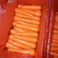 Nouvelle récolte Bonne qualité de carottes fraîches (80-150g)