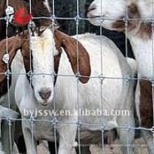 Prix de clôture de chèvre