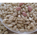2015crop Blanched Peanut Kernels 25/29