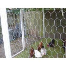 Alambre de pollo galvanizado / red de alambre hexagonal
