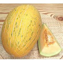 bulk fresh hami /fresh cantaloup cantaloupe /fresh hami melons