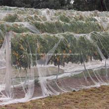 Filet en plastique HDPE noué noir anti-oiseaux de sécurité