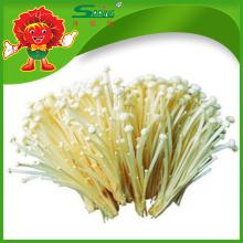 Gefrorene Enoki-Pilze Top-Qualität Weißer Nadel-Pilz