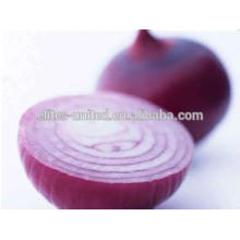 High Quality &Hot Selling ! 2014 fresh onion