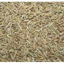 2015 nuevas semillas de comino saludables (ISO)