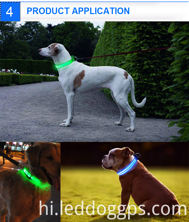 Night Collars For Dogs