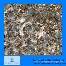 Nova alta qualidade nova lama caranguejo frutos do mar