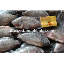 new black tilapia fish price