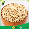 hot sale white pine nuts in bulk with cheap price