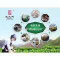 China fábrica chá verde chunmee chai tazo