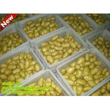 ¡Nueva patata china fresca de la granja (caliente! Caliente !!)