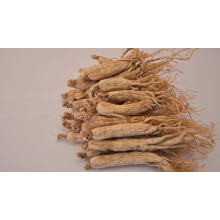 High quality pure natural factory wholesale pure dried ginseng herbal medicine