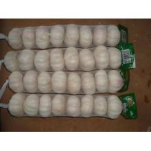Caixa normal de Garlic15 16pcs bag10kg do tamanho grande