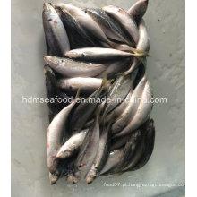 Peixes congelados frescos da cavala de cavalo