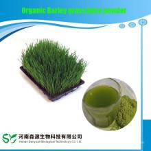Jugo de hierba de cebada orgánica en polvo