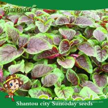 Suntoday где купить негибридные код ТНВЭД хозяйства с organicvegetable семена и растений сад семян амаранта (A40002)