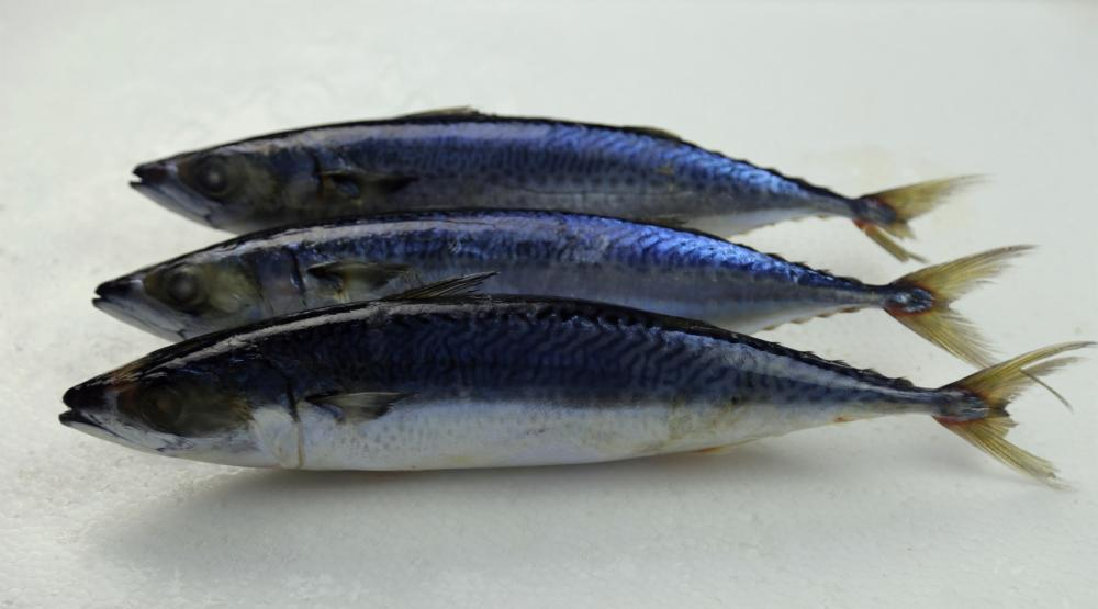 Whole Round Sea Frozen Mackerel