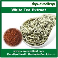 100% Natural White Tea Extract 30%-95% Polyphenols
