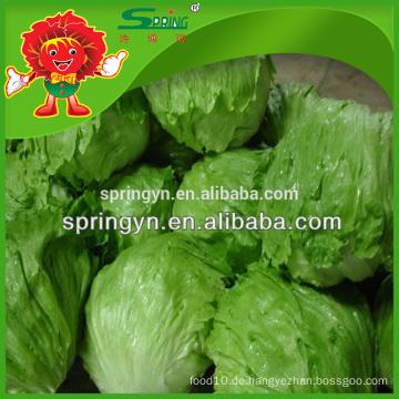 Salat Pflanzer beste Qualität Kopfsalat
