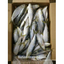 Gefrorene sardine