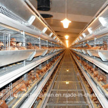 Équipement automatique de cage de volaille pour la maison de poulet