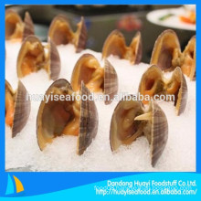 kinds of size frozen surf clam in shell sales well