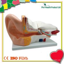 Modelo de ouvido humano 3D médico-educacional