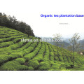 2017 manufacturer supply extra Black Tea