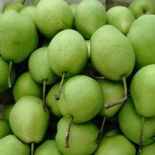 Heiße verkaufende neue Ernte der Shandong Birne