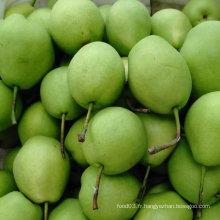 Vente chaude nouvelle récolte de poire Shandong
