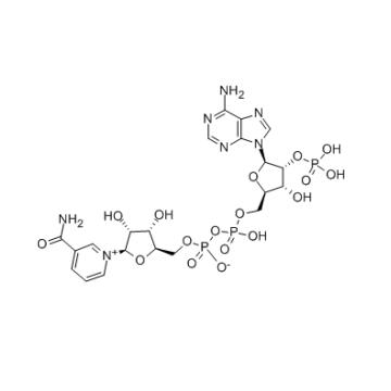 Nucleótido Trifosfopiridina de Alta Pureza CAS 53-59-8 En Stock