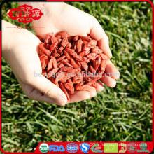 Le grossiste de baies de goji organique américain certifié par la FDA