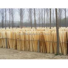 1.3mm 1270X840/640mm Poplar Core Veneer Poplar for Egypt Market