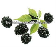 Acai Extract for sale from nature