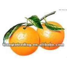 Fornecedor doce laranja de umbigo