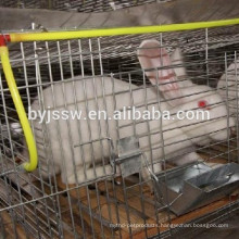 Automatic Water Feeder For Rabbits
